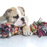 Prendas para cães