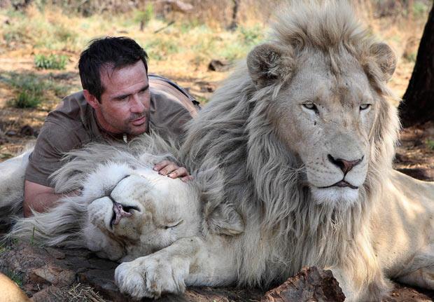conquistar um homem leão